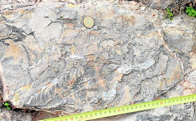Descubren fósiles de reptiles de más de 200 millones de años en un muro de Cehegín