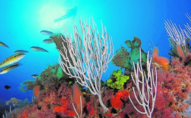 El calentamiento de los mares amenaza la biodiversidad