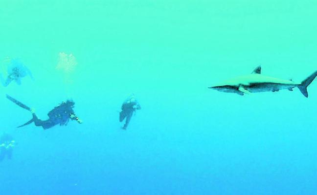 Una productora de Águilas graba un documental sobre el tiburón