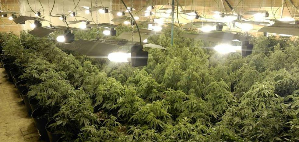 Desmantelan una nave con más de 200 plantas de marihuana en Cehegín