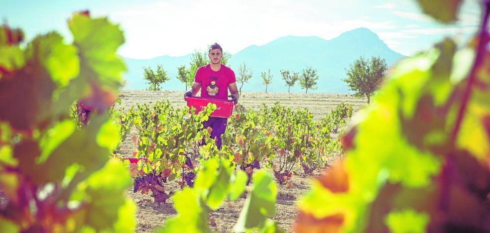 Casa Rojo se lanza hacia la prestigiosa certificación de Vino de Pago