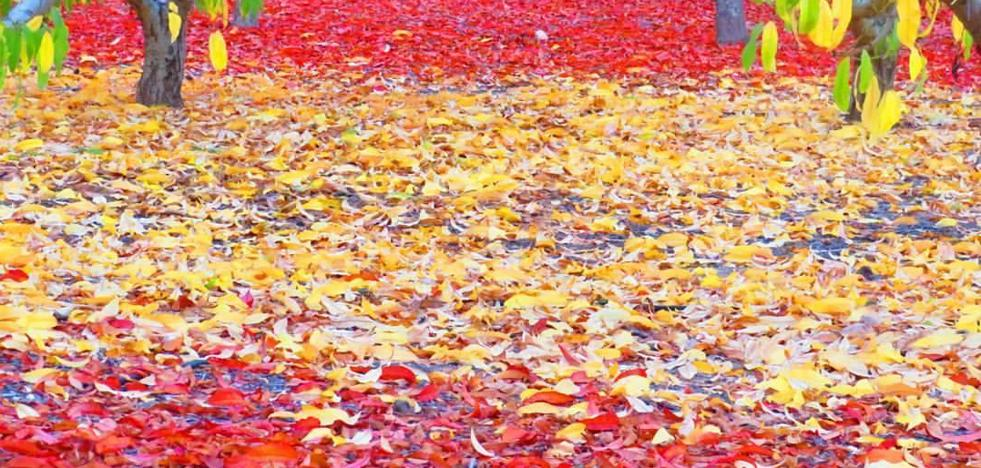 La preciosa foto del otoño español captada en la Región