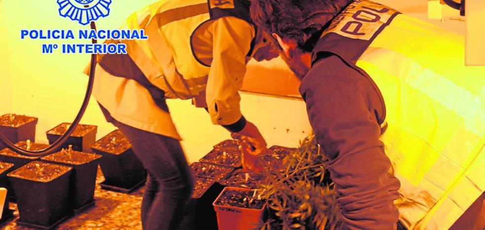 Dos detenidos por una plantación de 'maría' en una casa de Murcia