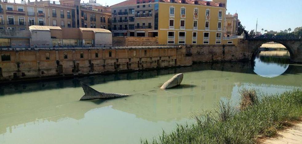 Huermur denuncia que el río Segura tiene un color «verde chocolate» a su paso por Murcia