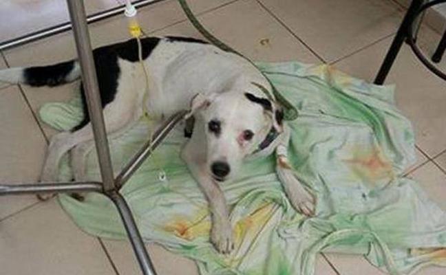 Muere un perro en el aeropuerto tras de un mes esperando a sus dueños