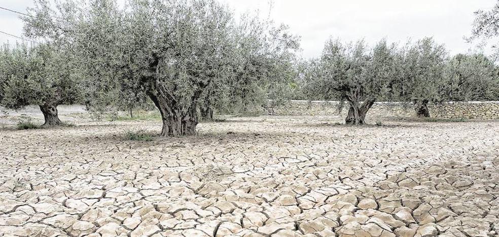 El precio de la sequía
