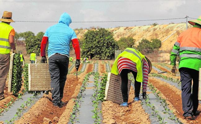 La Región lidera la superficie dedicada a cultivos ecológicos