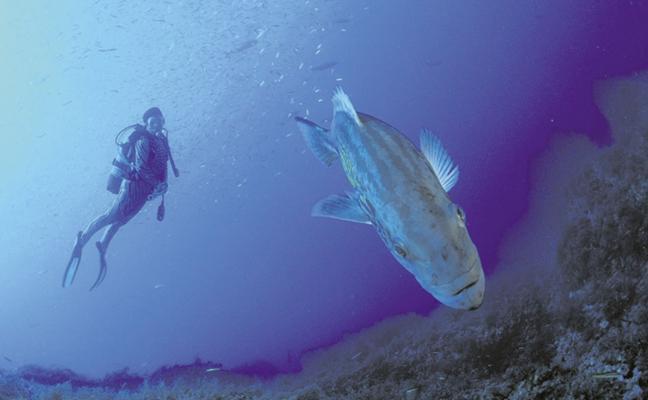 La riqueza del fondo del mar