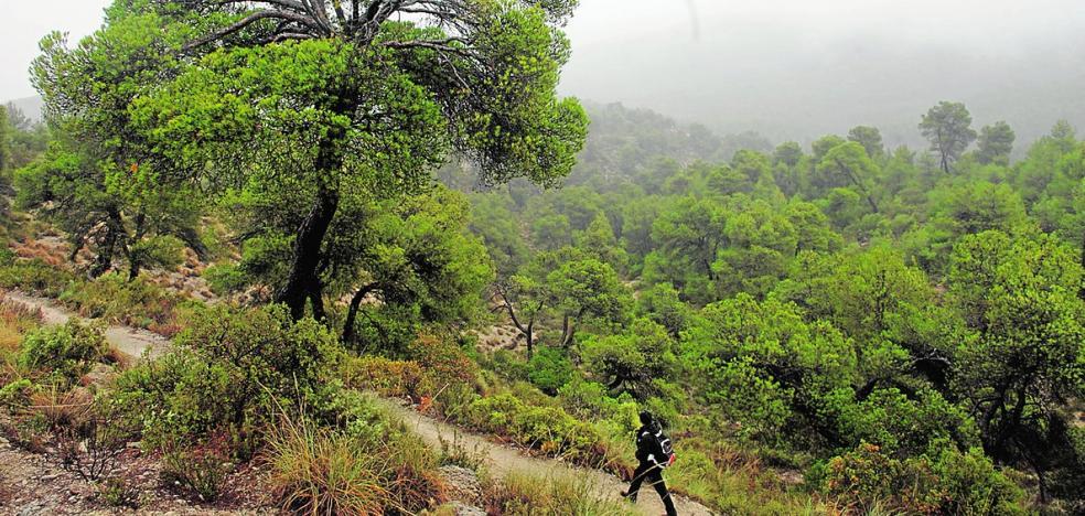 Estudian los efectos positivos de los bosques en la salud humana