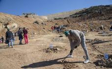 Doscientas hectáreas para el ciprés de Cartagena