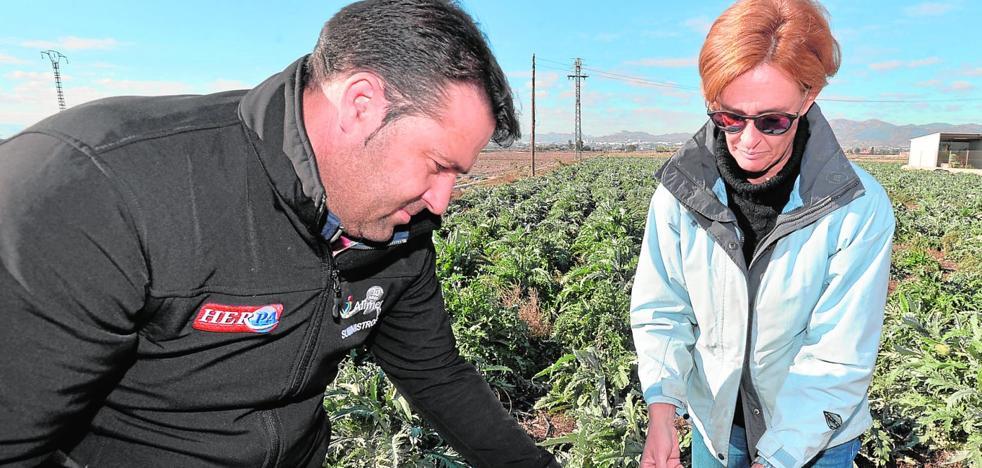 Las heladas provocan daños millonarios en los cultivos