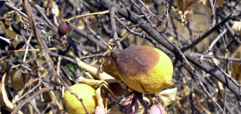 Los regantes también exigen un trasvase de socorro para salvar los árboles frutales