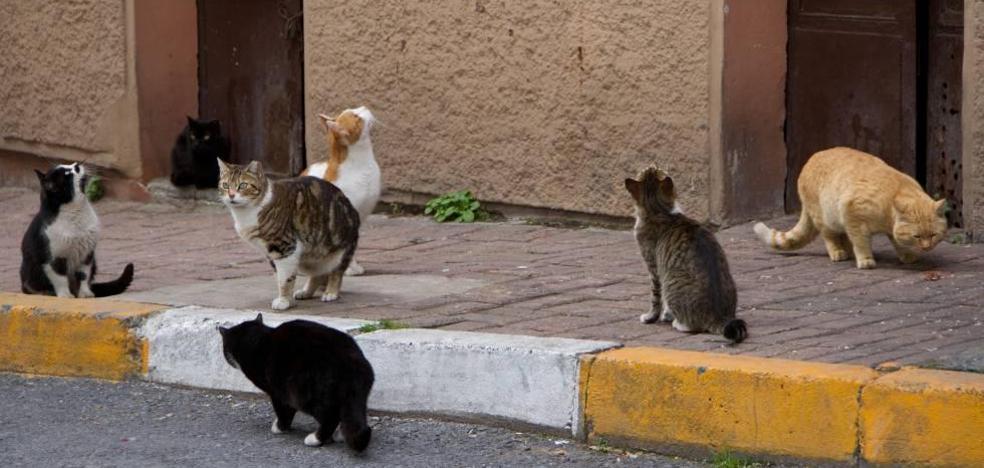 Un carné para poder dar comida a los gatos callejeros