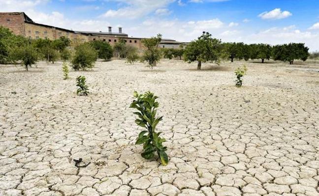Así puedes ayudar a combatir la sequía desde casa