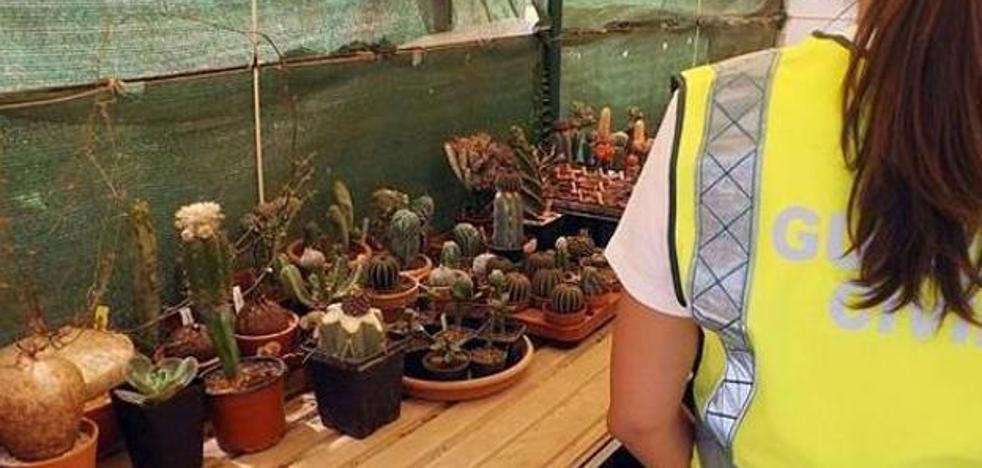 Se droga con un cactus y acuchilla a su madre, a su abuela y a su hermana