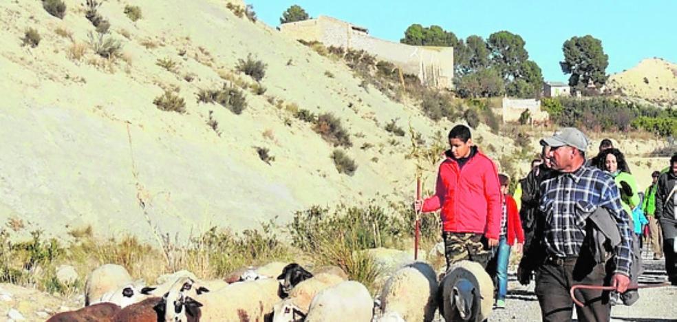 Buscan investigadores para explorar el potencial de la ganadería extensiva