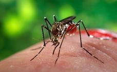 El mosquito siempre vuelve
