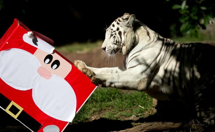 Papá Noel llega al zoológico