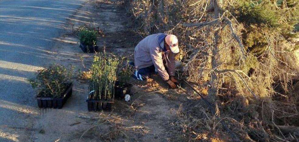 Los regantes plantan la barrera vegetal para frenar la contaminación