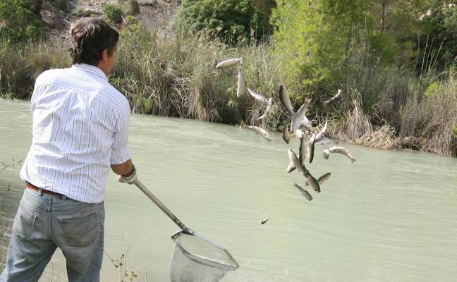Medio Ambiente deja sin publicar la orden de vedas de pesca fluvial
