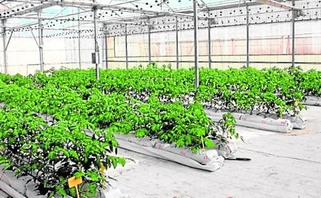 Europa apuesta por cultivar sin caudales y sin suelo