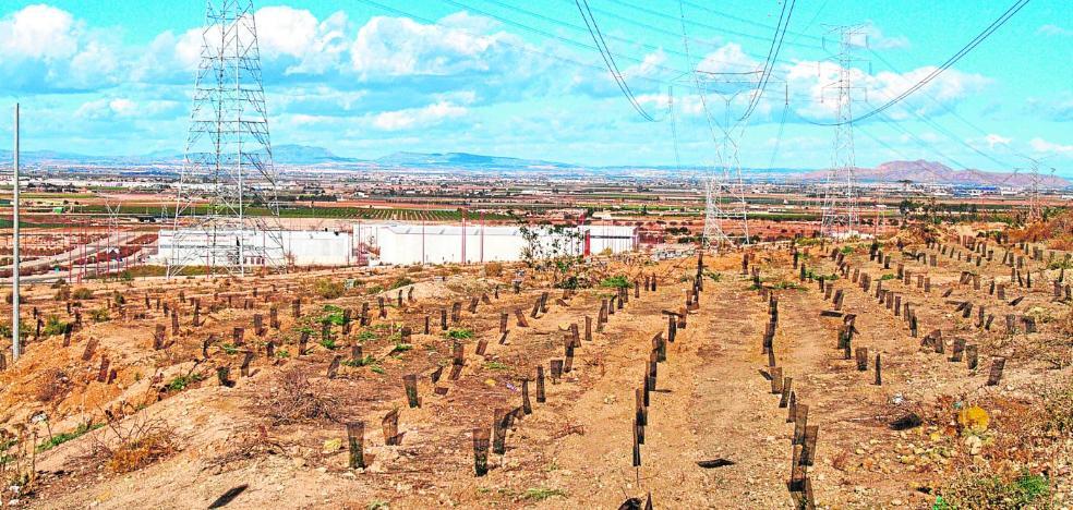 Otro impulso para 'verdear' los cerros
