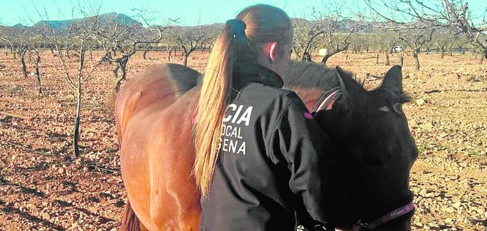 Atrapan a un caballo suelto