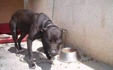 Un perro de raza peligrosa mata a un caniche ante los ojos de su dueña