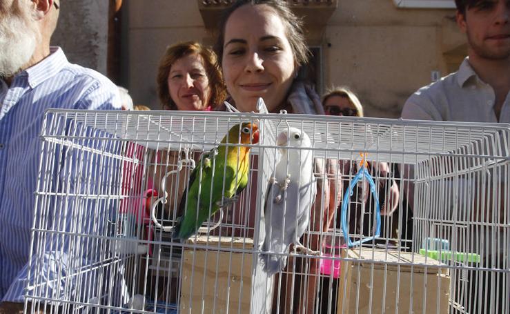 Los cartageneros bendicen a sus mascotas