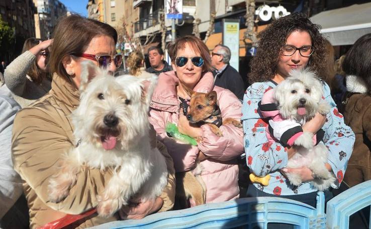 Bendición a las mascotas por San Antón