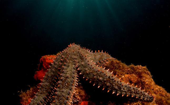 Las especies marinas se pueden ver en Itaca