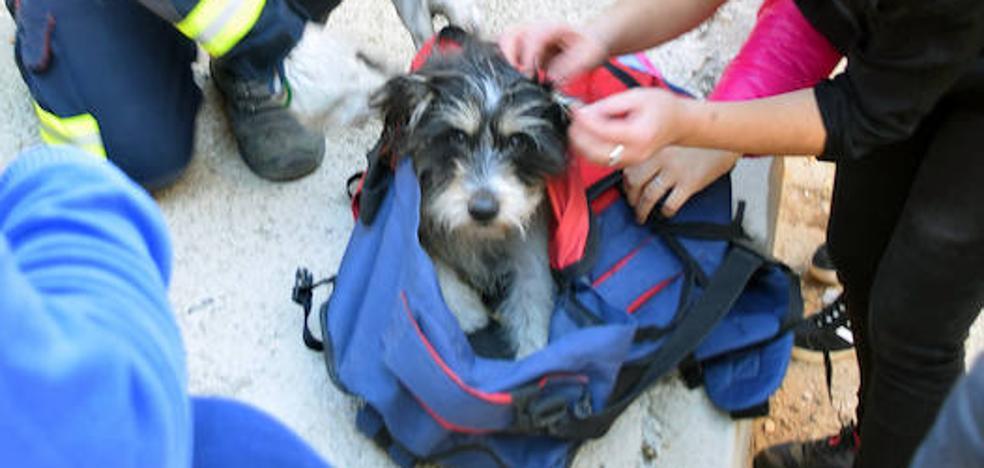 Rescatan a un perro que había sido arrojado desde un puente en Abarán