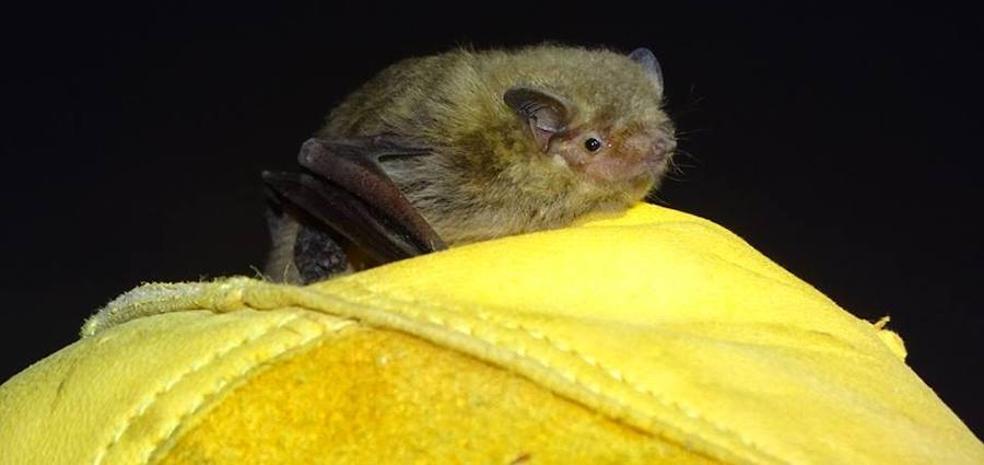 Murciélagos, tan feos y tan útiles
