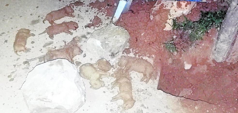 Imputan a tres miembros de una familia por enterrar vivos a nueve cachorros de perro