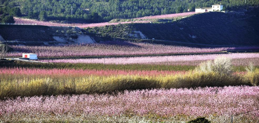 La 'Floración' prevé superar el récord de 40.000 turistas de la pasada edición