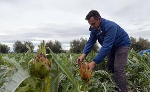 Los agricultores pierden 19 millones de euros por daños en los ocasionados por la climatología adversa en 2017