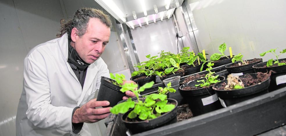 La UPCT mejora las defensas de las plantas ante virus y hongos