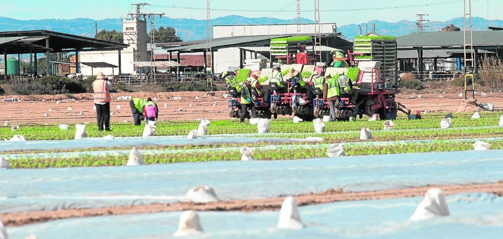 Agricultores y CC OO alertan de que la falta de agua puede dejar en paro al 25% de jornaleros