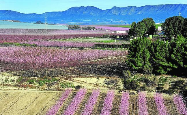 Las comunidades acuerdan con Agricultura que no se plante más fruta de hueso