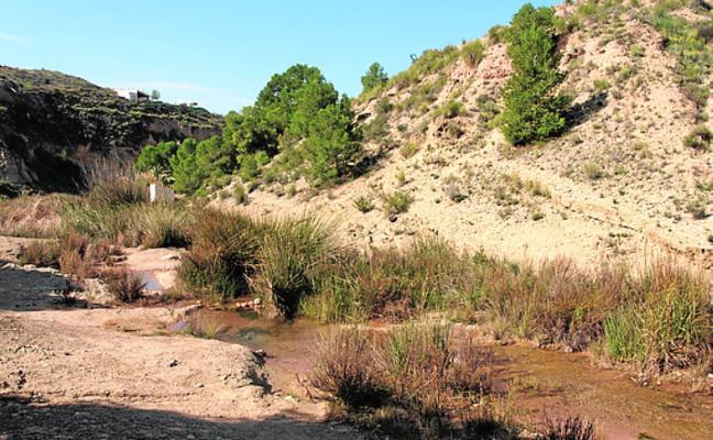 Publican un estudio sobre la gran biodiversidad del río Chícamo