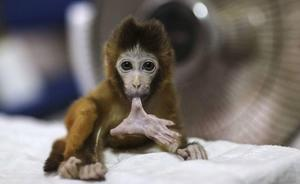 Piden multar a tres científicos en Alemania por experimentar con crueldad con monos