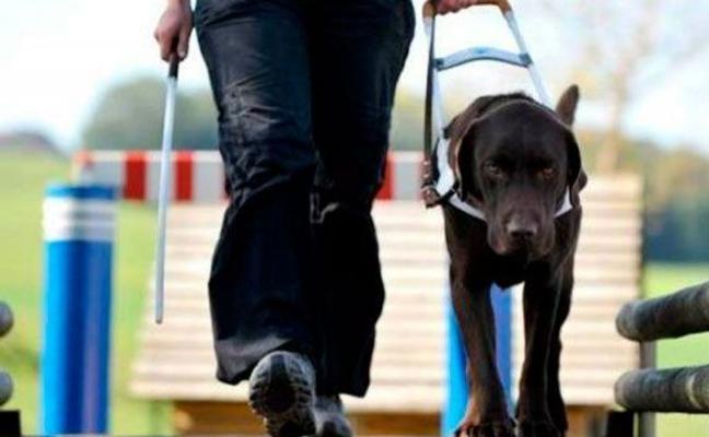 Reclaman que sea delito penal denegar el acceso a personas ciegas con perro guía