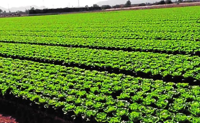 Family Office lanza una campaña para invertir en empresas agro de la Región