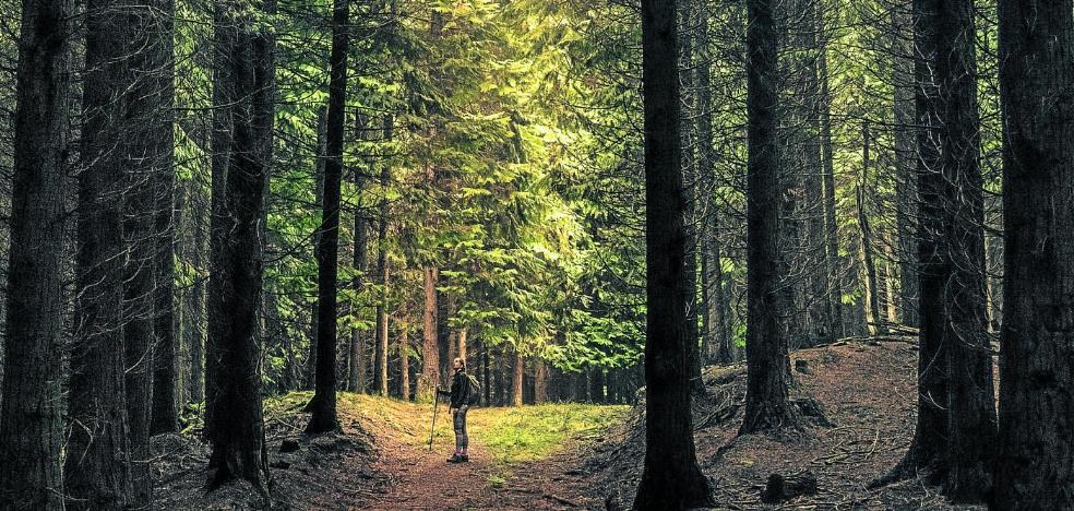 ¿Cuántos árboles hay en España? Alguien que se ha dedicado a contarlos todos y tiene una respuesta sorprendente