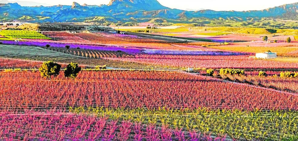 La floración dinamita las previsiones