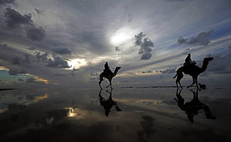 Camellos a la carrera