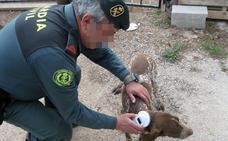 La Guardia Civil recupera un perro robado en una finca de Totana