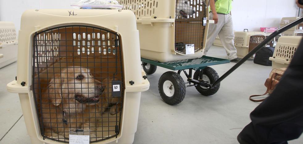 Muere un perro que viajó obligado en un compartimento superior de un avión