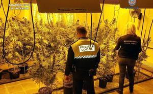 Desmantelan un sofisticado invernadero de marihuana en una pedanía de Lorca