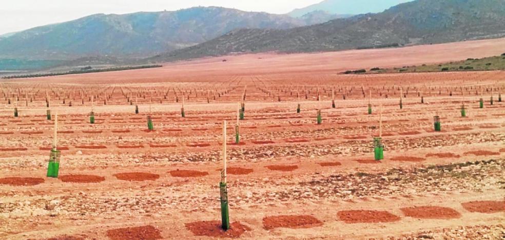 Denuncian la transformación de 180 hectáreas de secano a regadío